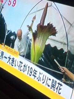 開花o(^-^)o…