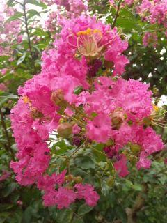 庭の花たち…