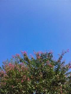 (最後の)真夏日!?…