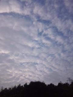 朝は曇り…