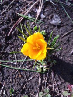 春の足音…