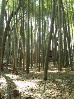 今日も竹やぶへ…