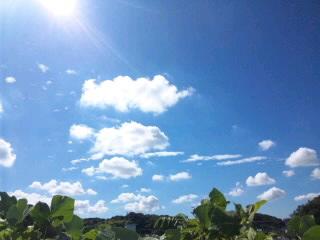 白い雲に乗り…