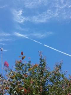 サルスベリと飛行機雲…