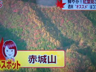 紅葉(テレビより)…