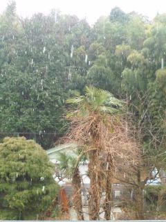 雨から雪に…