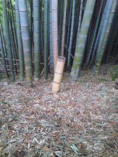竹やぶより…