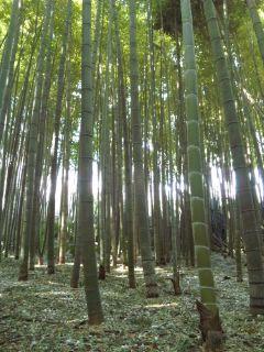 今日の竹やぶ…