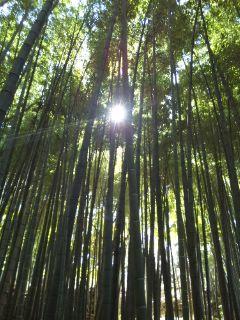 竹やぶの太陽…