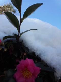 雪だらけ…